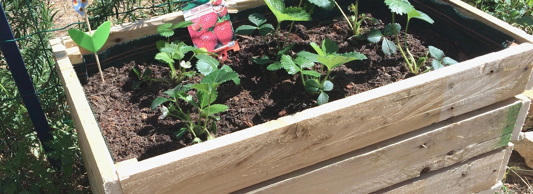 Pot Plante En Bois plantes en bacs free download read online - best free online
