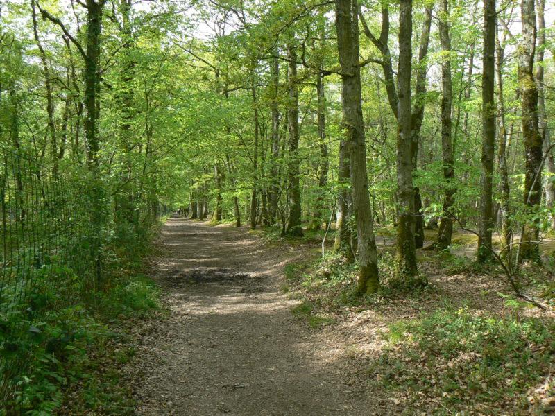 forêt éco-gérée